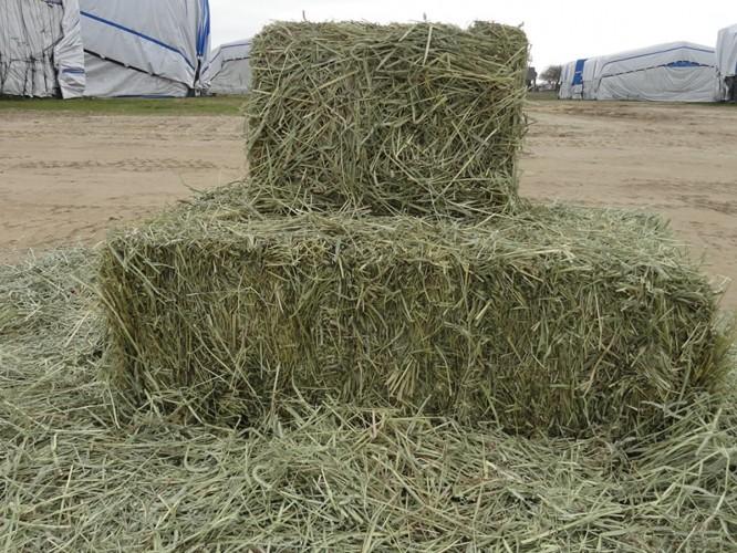 Domestic Hay