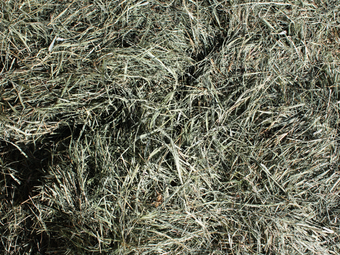 Klein Grass